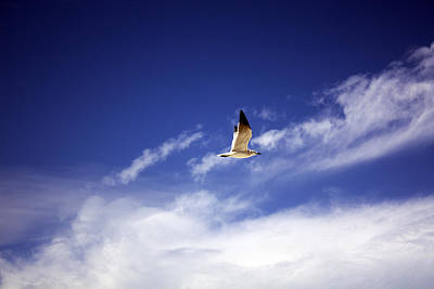 Flight In The Blue Sky Art Print by Kristen Vota