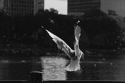 Photograph - Flight by Laurie Hasan