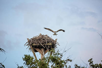 Photograph - Flight Lessons by Scott Pellegrin