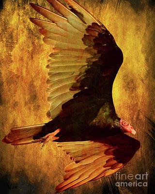 Wingsdomain Digital Art - Flight Of A Vulture . Texture . 40d8879 by Wingsdomain Art and Photography