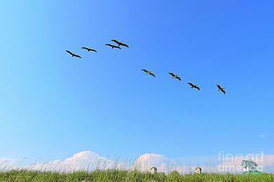 Photograph - Flight Of Eight by Shelia Kempf