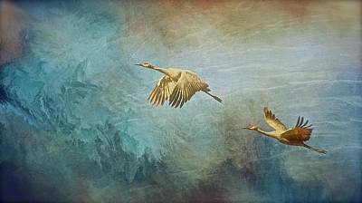 Photograph - Flight Of Fantasy, Sandhill Cranes by Flying Z Photography by Zayne Diamond