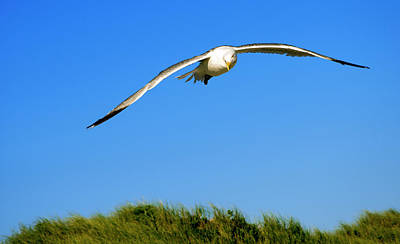 Photograph - Flight Of A Seagull by Alex Galkin