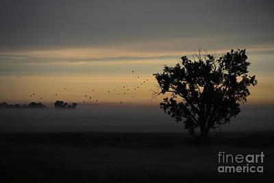 Photograph - Flight Of The Birds by Elizabeth Winter