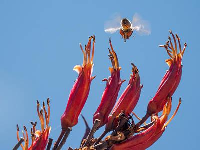 Photograph - Flight Of The Bumble Bee by Derek Dean