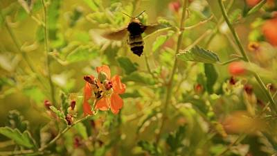 Photograph - Flight Of The Bumble Bee by Flying Z Photography by Zayne Diamond