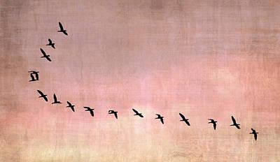 Cormorant Photograph - Flight Of The Cormorants by Mark Rogan