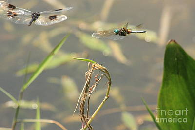 Photograph - Flight Of The Dragonflies by Terri Mills