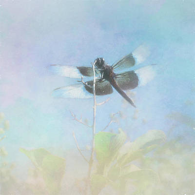 Photograph - Flight Of The Dragonfly by David and Carol Kelly