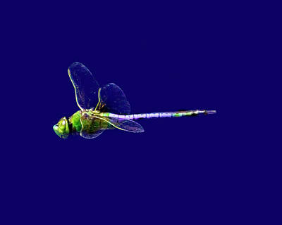 Photograph - Flight Of The Dragonfly by Mark Andrew Thomas