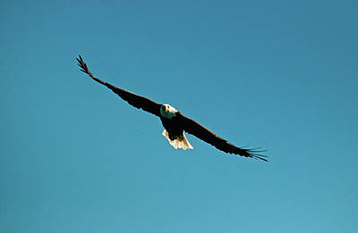 Photograph - Flight Of The Eagle by Paul Mangold