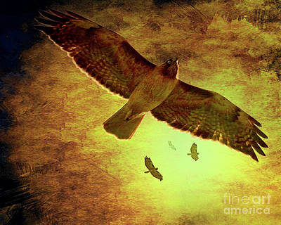 Hawk Birds Digital Art - Flight Of The Golden Hawks . 7d5066 by Wingsdomain Art and Photography