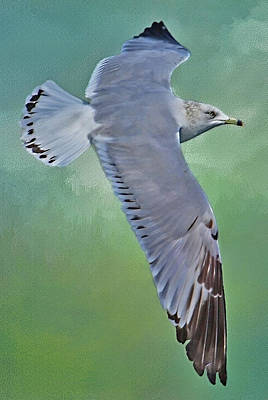 Photograph - Flight Of The Gull 2 By H H Photography Of Florida by HH Photography of Florida