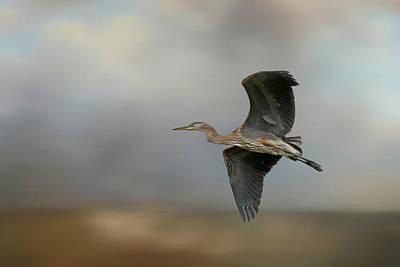 Photograph - Flight Of The Heron - 365-117 by Inge Riis McDonald