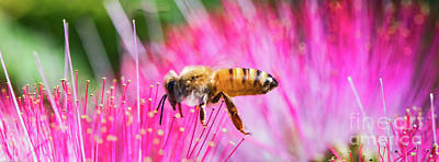 Photograph - Flight Of The Honey Bee by Mitch Shindelbower