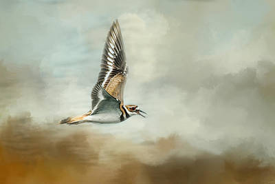 Flight Of The Killdeer Art Print