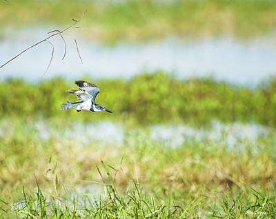 Photograph - Flight Of The Kingfisher by Fran Gallogly