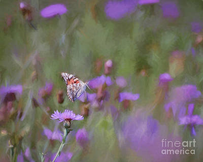 Butterfly Photograph - Flight Of The Lady by Kerri Farley