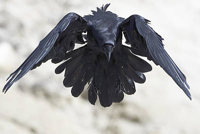 Modern Man Surf - Flight Of The Raven by Jestephotography Ltd