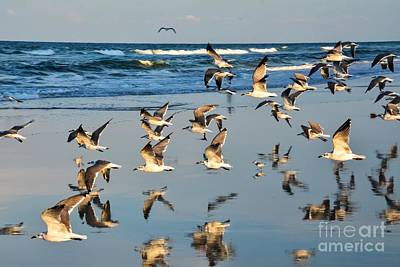 Photograph - Flight Of The Seagull by Debbie Green