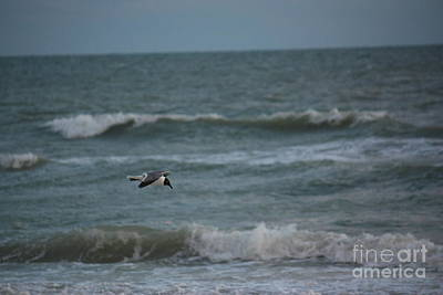 Photograph - Flight Of The Seagull by Terri Mills