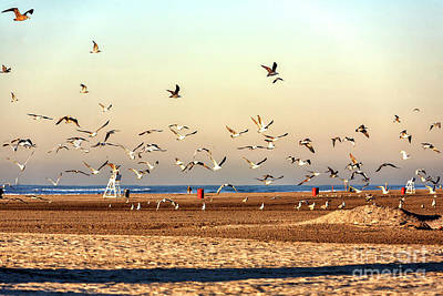 Photograph - Flight Of The Seagulls In Wildwood by John Rizzuto
