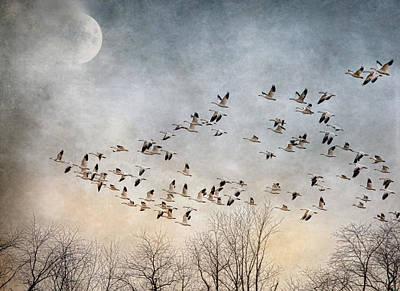 Photograph - Flight Of The Snow Geese by Pat Abbott