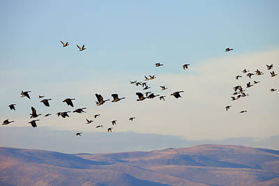 Flight Of The Waterfowl Original by Mike  Dawson