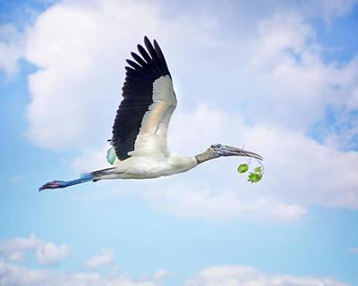 Beauty Mark Photograph - Flight Of The Wood Stork by Mark Andrew Thomas