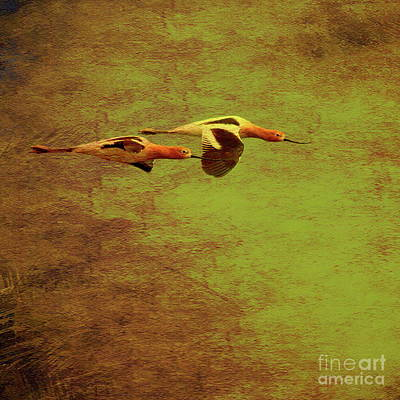 Bif Photograph - Flight Of Two American Avocets . Texture . Square . 40d5412 by Wingsdomain Art and Photography