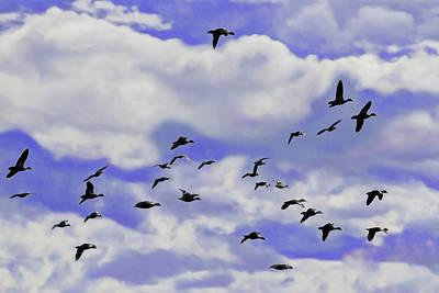 Photograph - Flight Over Lake by Miroslava Jurcik