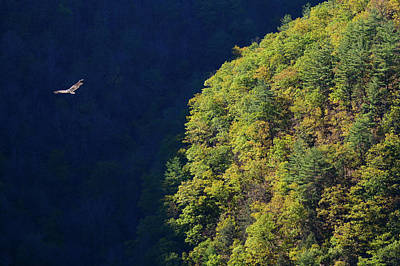 Photograph - Flight Over Pine Creek Gorge by Tana Reiff