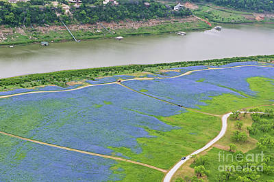 Photograph - Flight Over The Bluebonnets by Cathy Alba
