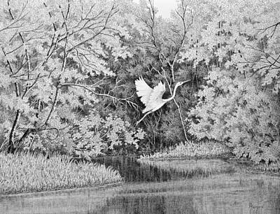 Egret Drawing - Flight Over The Bogue Falaya by Colleen Marquis