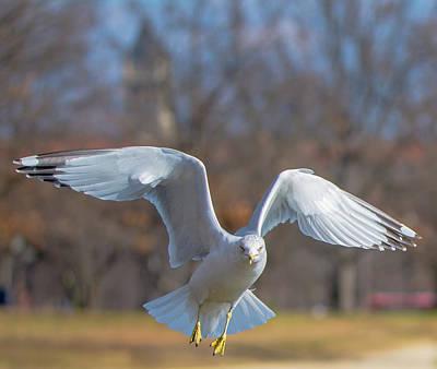 Photograph - Flight Profile by Jeff at JSJ Photography