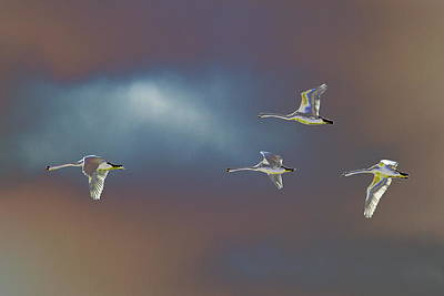 Photograph - Flight by Richard Patmore
