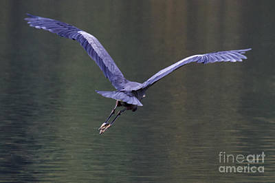 Wapato Photograph - Flight by Sean Griffin