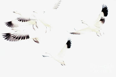 Photograph - Flight by Tamera James