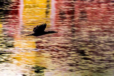 Photograph - Flight To Solitude by Ramabhadran Thirupattur