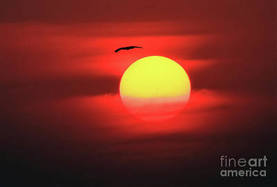 Photograph - Flight To The Sun by Roger Becker