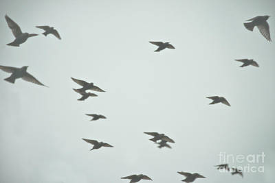 Photograph - Flight by Wanda Krack