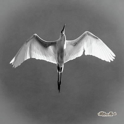 Photograph - Flight by William Havle