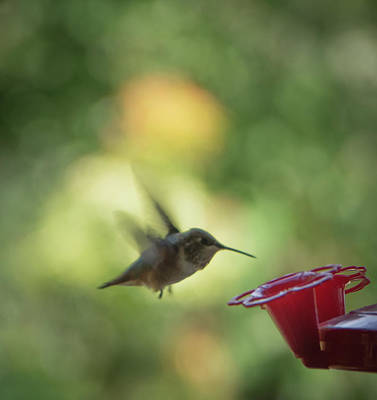 Photograph - Tiny Hummingbird by Marilyn Wilson