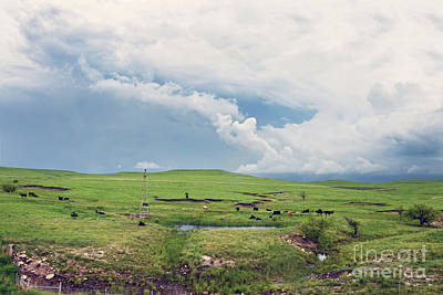Photograph - Flint Hills Pasture by Catherine Sherman