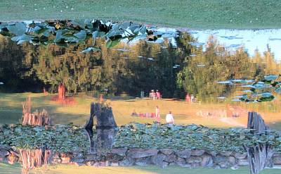 Photograph - Flipped Reflection Of Trees And Lily Pads by Karen Molenaar Terrell