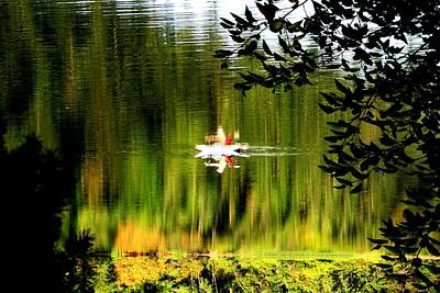 Photograph - Flipped Reflection On Lake Padden by Karen Molenaar Terrell