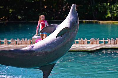 Backflip Photograph - Flipper Does A Back Flip  by Rick Bravo