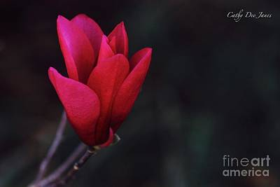 Photograph - Flirt by Cathy Dee Janes