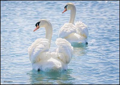 Photograph - Flirting Swans by LeeAnn McLaneGoetz McLaneGoetzStudioLLCcom