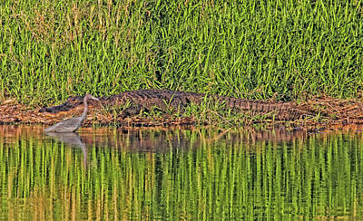 Photograph - Flirting With Danger by HH Photography of Florida